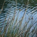 """Lake Lagunitas Marin County CA.   MichaelOlsen/Zor"" by ZorkMagazine"