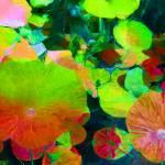 """""""Aquatic Plants"""" by mdarrah"""
