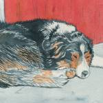 """Sleeping Border Collie"" by mozache"