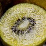 """Golden Kiwi Fruit"" by Jongarrett777"