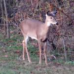 """""""Deer 08"""" by paintballerghost"""