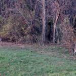 """""""Deer 10"""" by paintballerghost"""