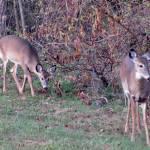 """""""Deer 12"""" by paintballerghost"""