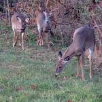 """""""Deer 14"""" by paintballerghost"""