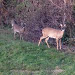 """""""Deer 20"""" by paintballerghost"""