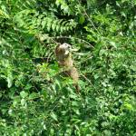 """""""Tree Climbing Groundhog 02"""" by paintballerghost"""