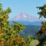 """Mt Hood_Bluff Road Viewpoint_As Bare As It Gets_ 9"" by barbsummering"