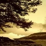 """Morning Fog"" by paulcausie"