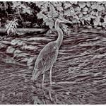 """HeronWeirHDRMarooned_2205"" by plantaen"