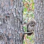 """Owl"" by jdharrison"