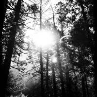 Light through trees - black and white Art Prints & Posters by HIDEAKI SAKURAI