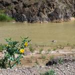 """Ghezel Ozan River"" by Shervin"