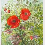 """poppy wild 2"" by sandrafrancis"