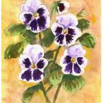 """white pansies"" by sandrafrancis"