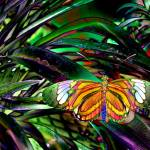 """2011striped butterfly"" by naturefantasy"