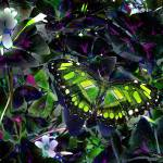 """butterfly on shamrock"" by naturefantasy"