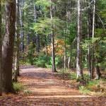 """""""Bangor Forest"""" by Andrew_Hardin"""