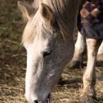 """""""horse"""" by hardman"""