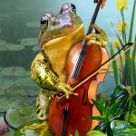 """Serenading frog"" by Unique_designs"