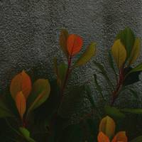 Coral Leaves, Gray Wall