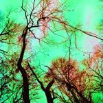 """Up a Colorful Tree"" by stilljustabill"