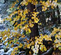 Snowmass Wilderness...autumn 2011 015