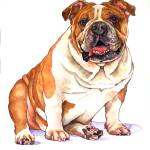 """B for Bulldog"" by wendyedelson"