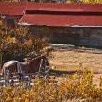 """Horse and Barn, Garden Cr Hills"" by SamSherman"