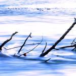 """River Debris"" by TeacherWithWings"