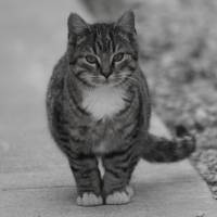 """Sidewalk Kitty"" by Kim Carr"
