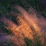 """""""Mist Grass"""" by mdarrah"""