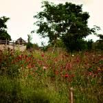 """""""Field of Flowers"""" by tsgentuso"""