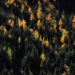 """""""Larch 67"""" by 13thAvenue"""