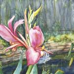 """Peach Canna by the Pond_2"" by allinghamcarlson"