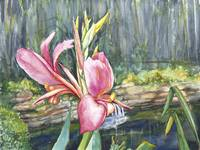 Peach Canna by the Pond_2