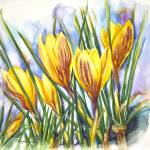 """Spring Crocus"" by allinghamcarlson"