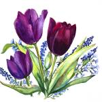 """Tulips"" by allinghamcarlson"