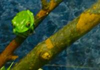 Cute Little Green Frog