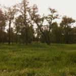 """""""Dusky Landscape"""" by kaydub"""