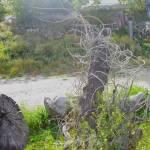 """""""Funky tree"""" by kaydub"""