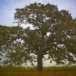"""""""Lamenting Tree"""" by bluejawa"""
