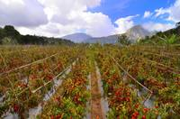 rinjani mountain farms