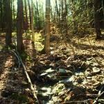 """Sunlit Woodland Stream"" by RLHall"