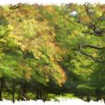 """New Forest Autumn"" by DaveScott"