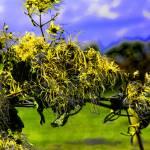 """""""Yellow Flowers"""" by DaveScott"""