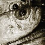 """""""Fish 4"""" by SkipNall"""
