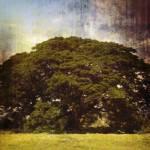 """Giant Oak Tree 1"" by SkipNall"