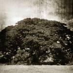 """Giant Oak Tree 2"" by SkipNall"