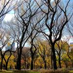 """Sky Trees, Central Park - NYC"" by biriart"