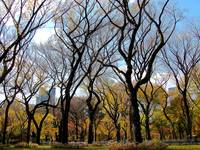 Sky Trees, Central Park - NYC
